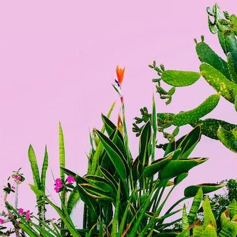 Pflanze auf rosa. draußen. minimales modedesign. pflanzenliebhaber. grüner garten tropische stimmung