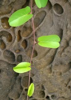 Pflanze auf seltsame felsformation backgrou