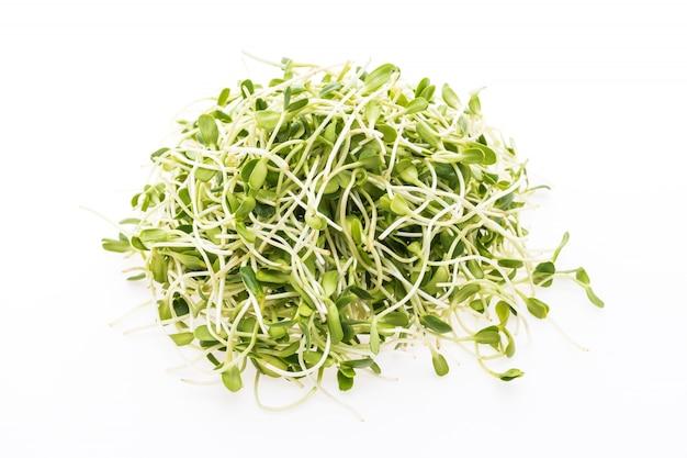 Pflanze gourmet natur vegetarier sämling