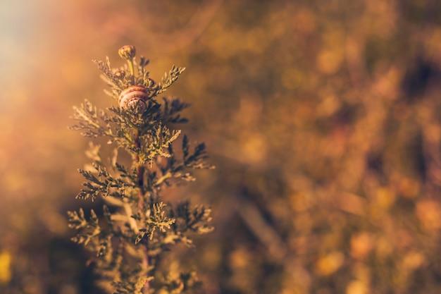 Pflanze im sonnenlicht mit schnecke