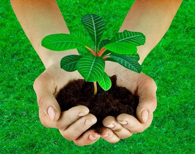 Pflanze in einer hand isoliert auf dem grashintergrund
