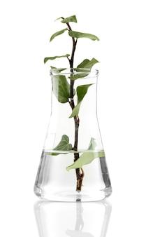 Pflanze in kolben isoliert auf weiß