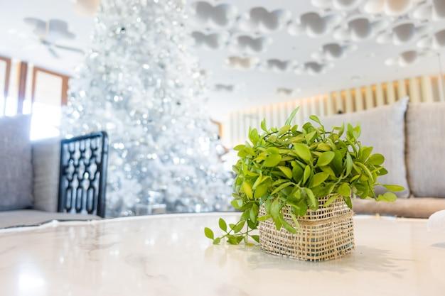 Pflanze in korbdekoration auf tisch