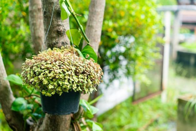 Pflanze in topfblume, die an einem baum hängt