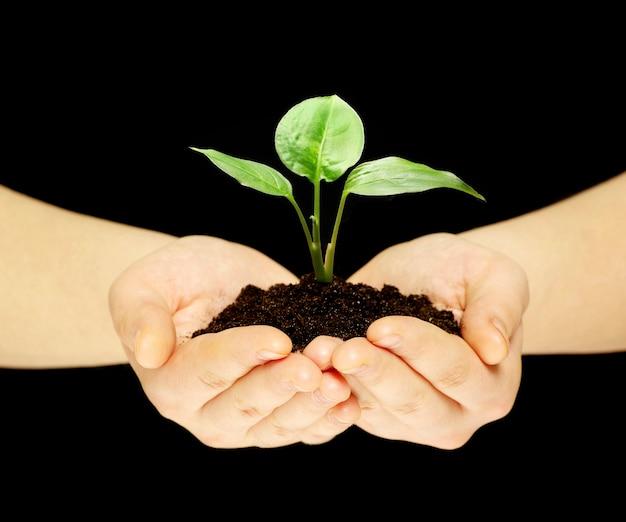 Pflanze ist in händen auf schwarz isoliert