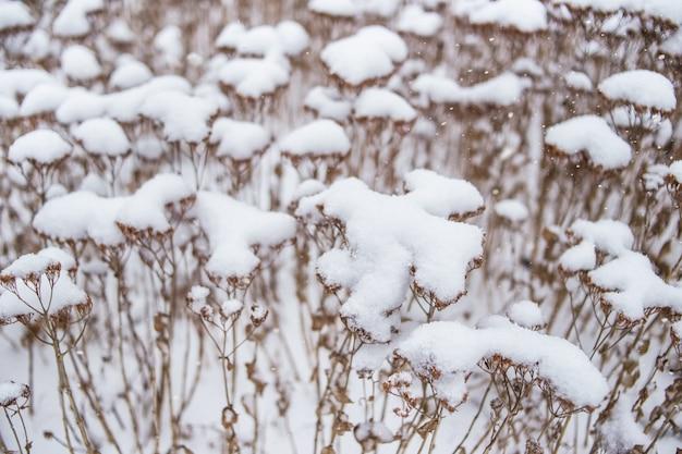 Pflanze mit blättern bedeckt mit morgen frost. foto im spätherbst aufgenommen.