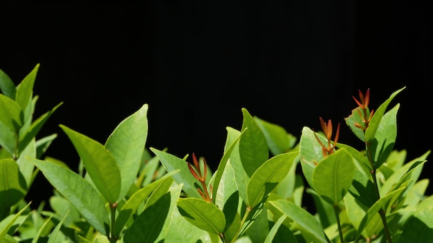 Pflanze mit grünen blättern vor schwarzem hintergrund.