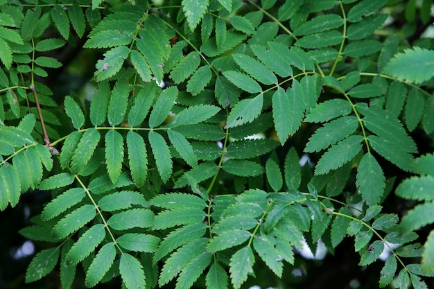 Pflanze mit kleinen grünen blättern, die in einem ruhigen wald wachsen