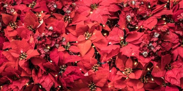 Pflanze mit roten blättern