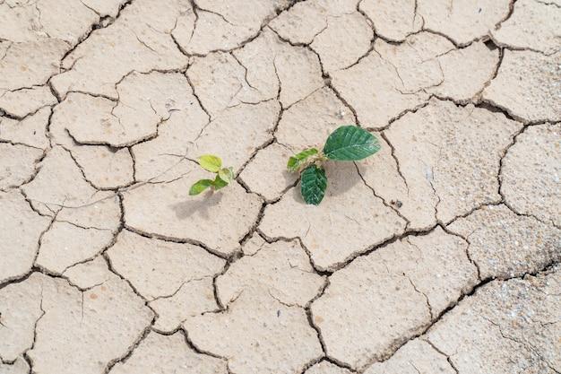 Pflanze überleben auf trockenem boden und trockenheit