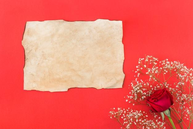 Pflanze und frische wunderbare blume in der nähe von papier