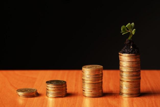 Pflanze und viele goldene münzen auf schwarz