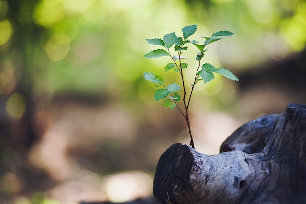Pflanze wächst aus einem baum