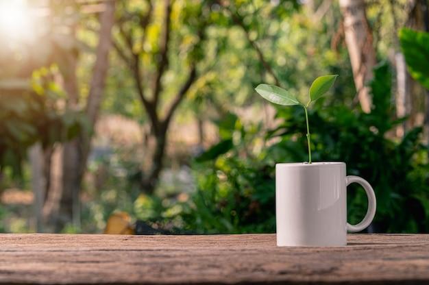 Pflanze wächst aus einer tasse