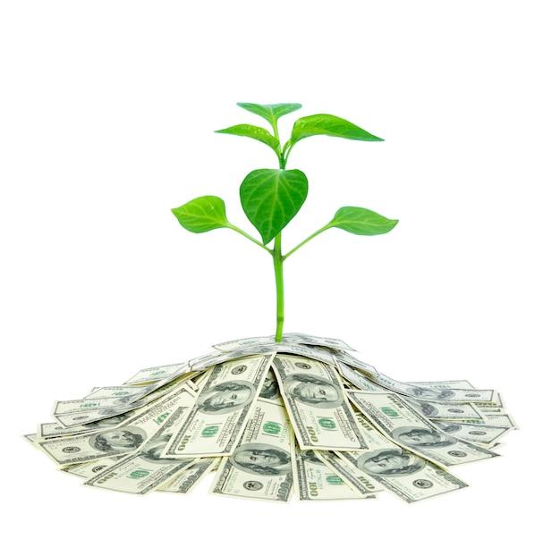 Pflanze wächst im geld