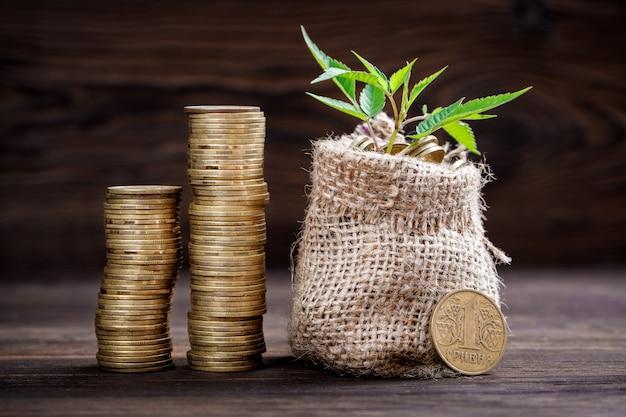 Pflanze wächst in münzen tasche für geld