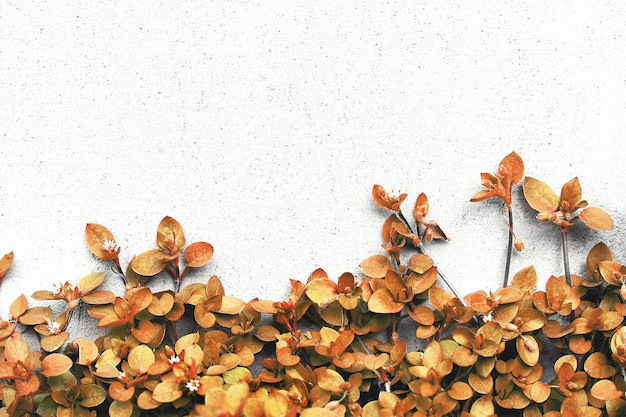 Pflanzen auf dem hintergrund der wand