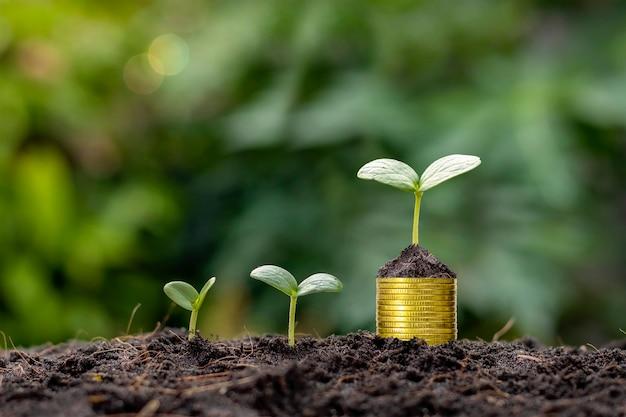Pflanzen auf erde und auf einem stapel goldmünzen mit unscharfem hintergrund.