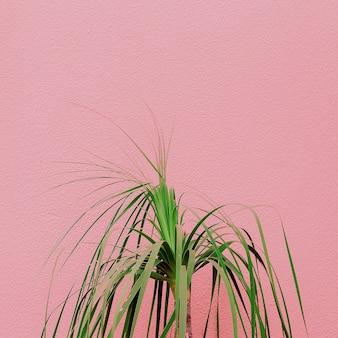 Pflanzen auf rosa konzept. pflanzenliebhaber. minimal kanarische insel