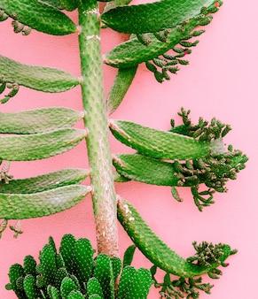 Pflanzen auf rosa modekonzept. kaktusbaum auf rosa wandhintergrund