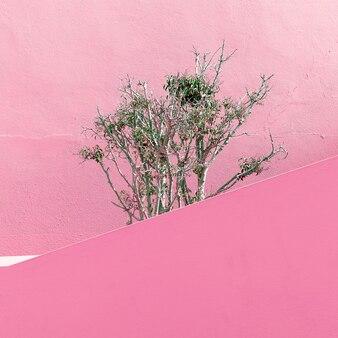 Pflanzen auf rosa modekonzept. minimales design