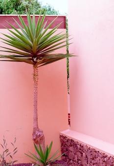 Pflanzen auf rosa modekonzept. tropische lage. palme. kanarische insel