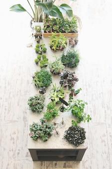 Pflanzen auf tischplatte