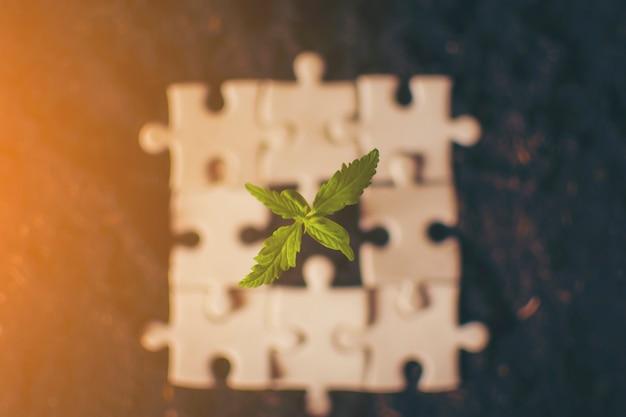 Pflanzen-cannabis-puzzle
