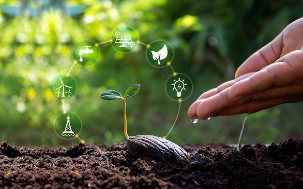Pflanzen, die auf dem boden wachsen, und hände, die pflanzen mit symbolen gießen, die sich auf das pflanzenwachstum beziehen. konzept der landwirtschaft und des nachhaltigen pflanzenwachstums.