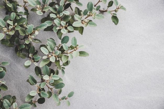 Pflanzen, die im sandhintergrund wachsen