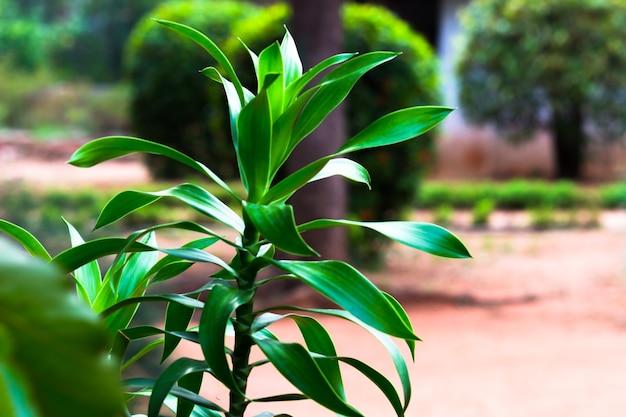 Pflanzen, die tagsüber das natürliche sonnenlicht auf dunklem hintergrund reflektieren