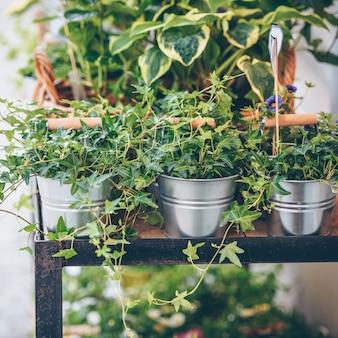 Pflanzen in den töpfen auf den tisch gestellt