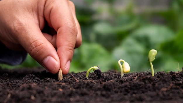 Pflanzen in erde in der reihenfolge der keimung oder des pflanzenwachstums pflanzen und pflanzen von hand in erde pflanzen.