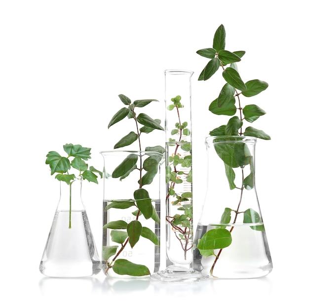 Pflanzen in flaschen isoliert auf weiß