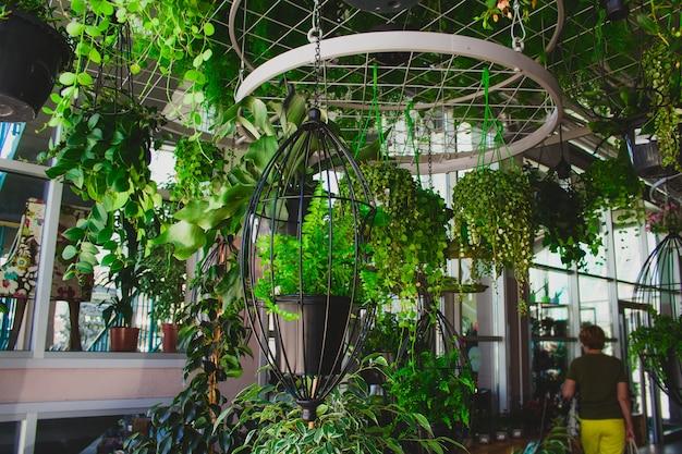 Pflanzen in hängenden pflanzgefäßen im gewächshaus des blumenmarktes