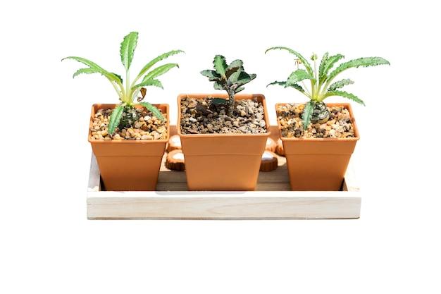 Pflanzen in kleinen töpfen für haus und garten isoliert.