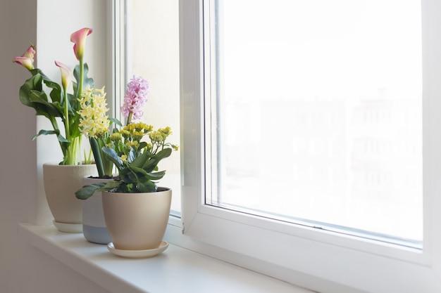 Pflanzen in töpfen auf weißer fensterbank drinnen