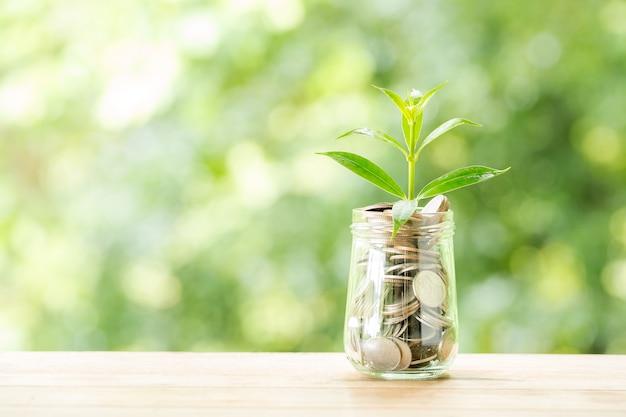 Pflanzen sie das wachsen von den münzen im glasgefäß auf unscharfer natur