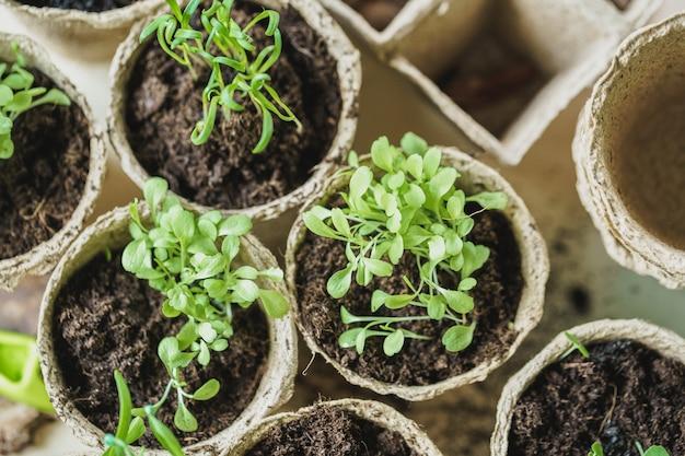 Pflanzen sie im sämlings-torftopf auf einem holztisch