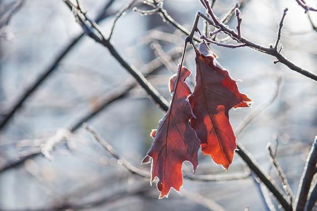 Pflanzen sie mit braunen blättern, die mit morgenfrost bedeckt sind. spätherbst.