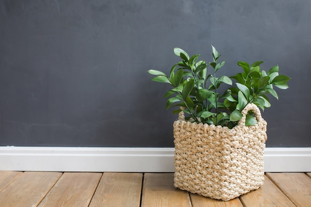 Pflanzen sie wanne gegen eine graue wand auf einem bretterboden