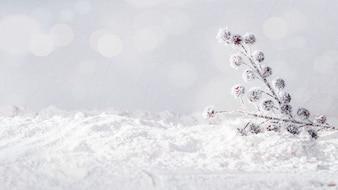Pflanzen Sie Zweige am Ufer des Schnees und der Schneeflocken