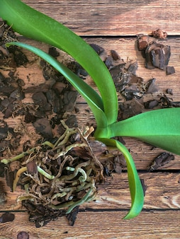 Pflanzen transplantieren. orchideen transplantieren. hausgarten, orchideenzucht.