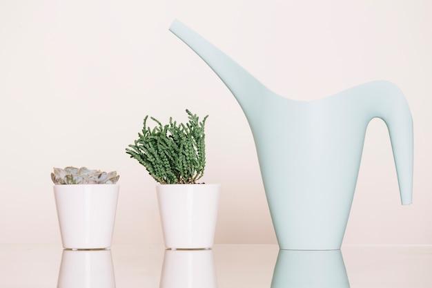 Pflanzen und gießkanne