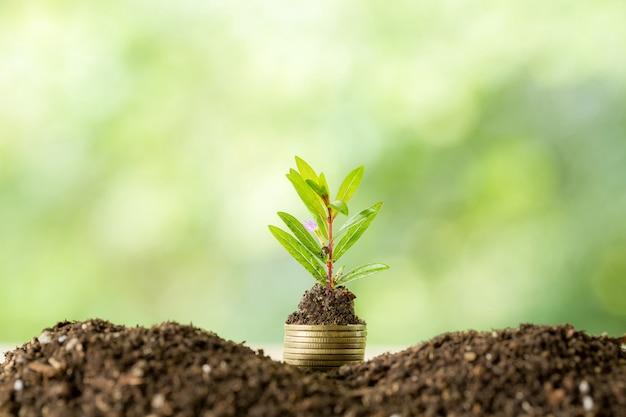 Pflanzen von bäumen auf einem münzenstapel mit sonnenlicht