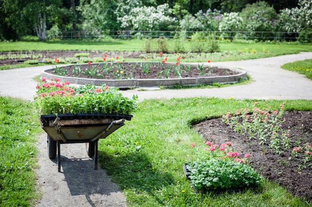 Pflanzen von pflanzen, blumen im park, garten, schubkarre, land, anbau