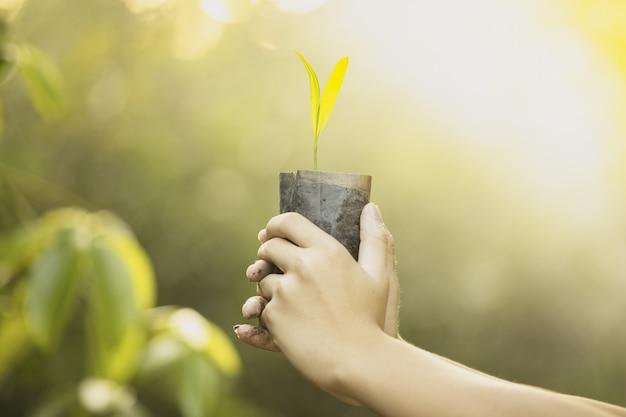 Pflanzen von wäldern, setzlinge in der hand