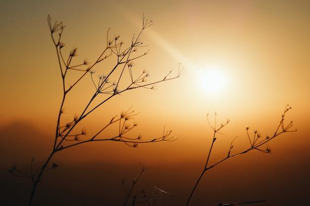 Pflanzen während eines atemberaubenden sonnenuntergangs