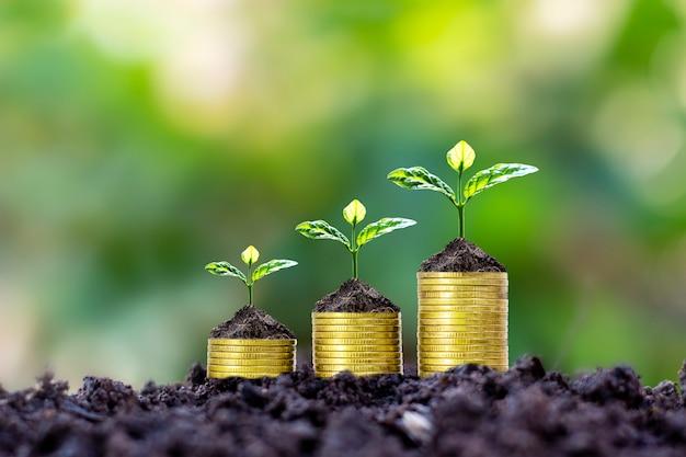 Pflanzen werden auf münzstapeln für finanzen und bankgeschäfte gepflanzt, um geld zu sparen und in das finanzgeschäft zu investieren.