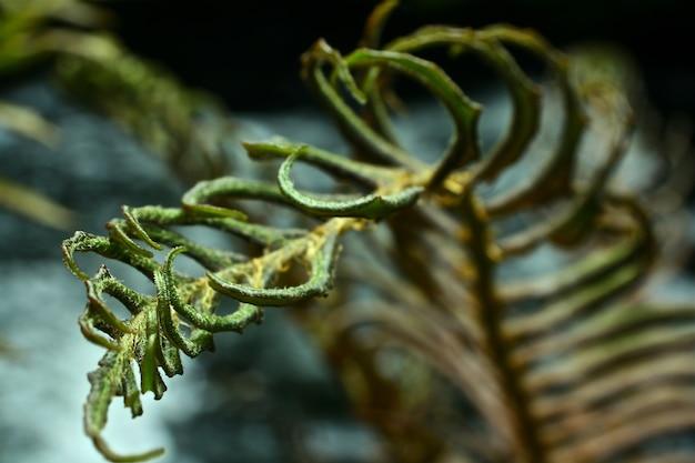 Pflanzenblätter